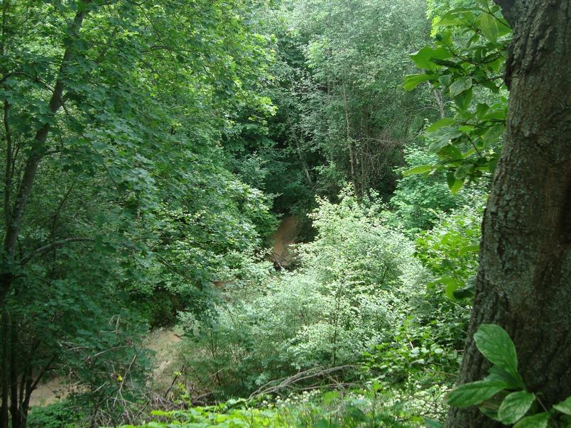 Спуск в овраг к речке Каменец, со стороны Овражной улицы.