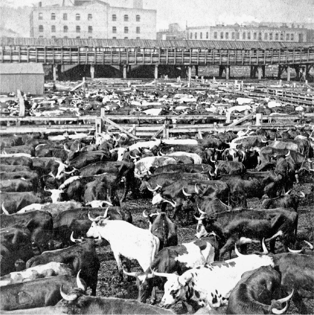 коровы бойни в чикаго