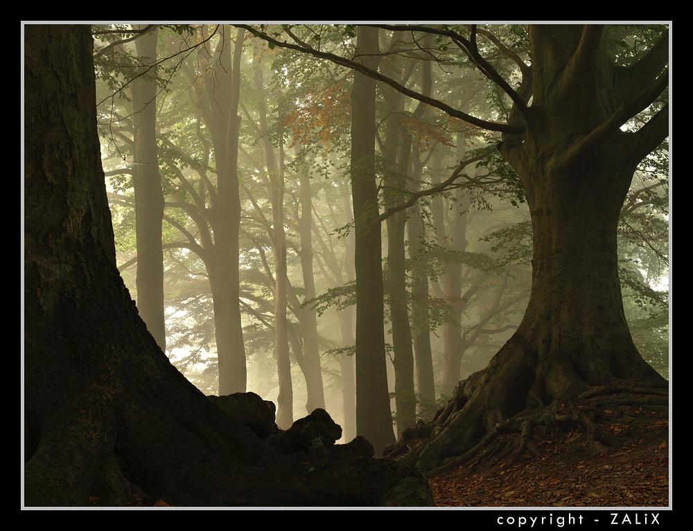 Голландские холмы, часть 2 i_mar_a