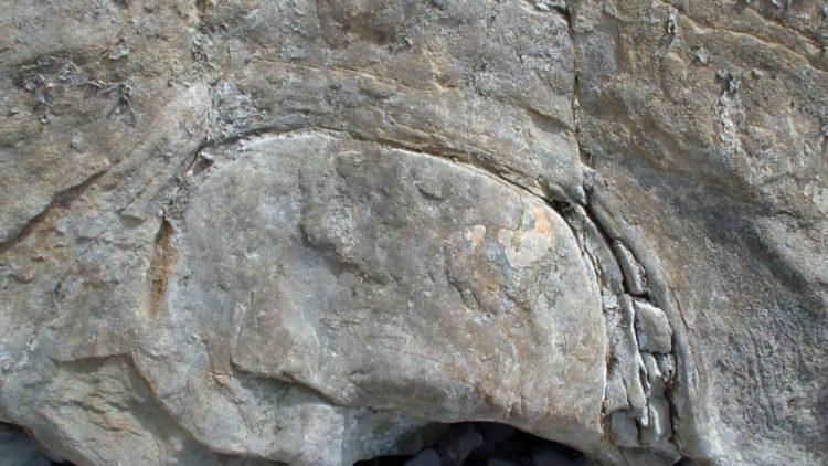 Сучок в камне