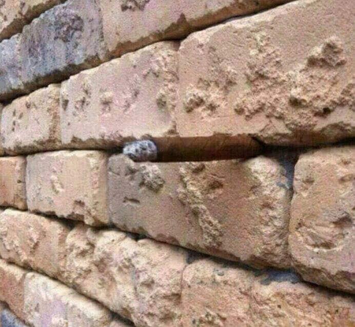 сигара в стене