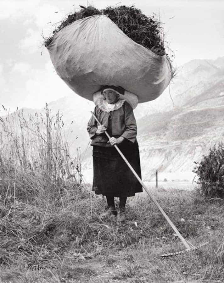 Сенокос в Италии, 1959 г.