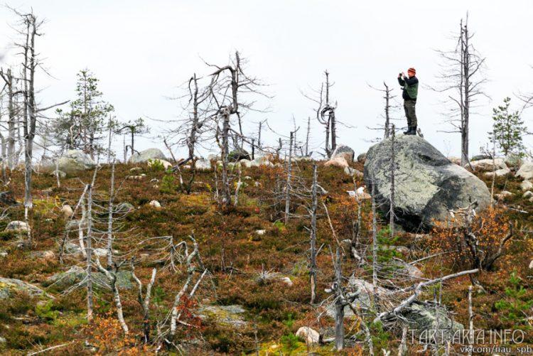 Der Besoffene Wald Нео Фициал